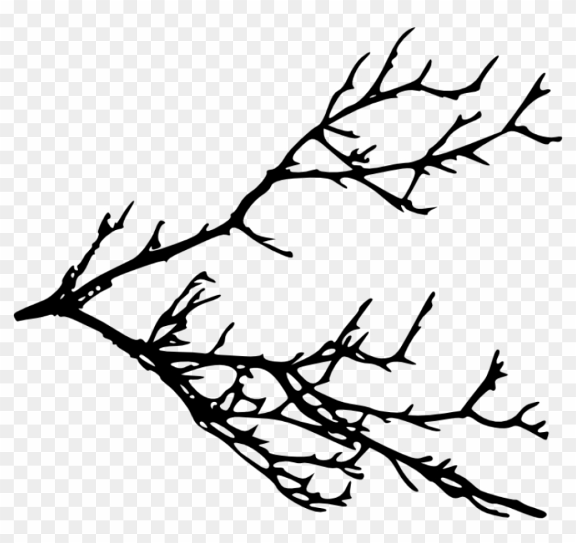 Free Png Tree Branches Silhouette Png Images Transparent - Tree Branches Silhouette #2019