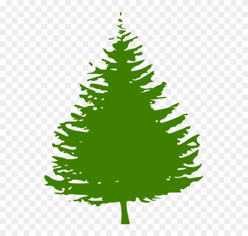 Pine Clipart Fir Tree - Fir Tree Clip Art #2293