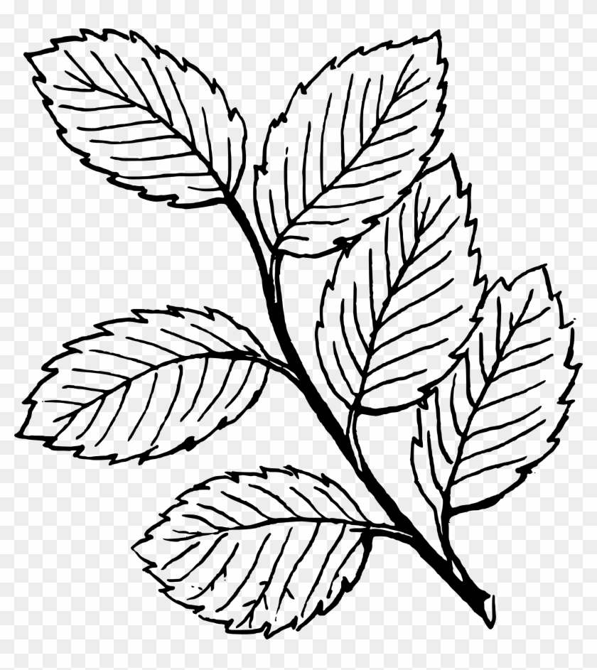 Fall Black And White Fall Leaf Clipart Black And White - Leaves Coloring Pages #2414