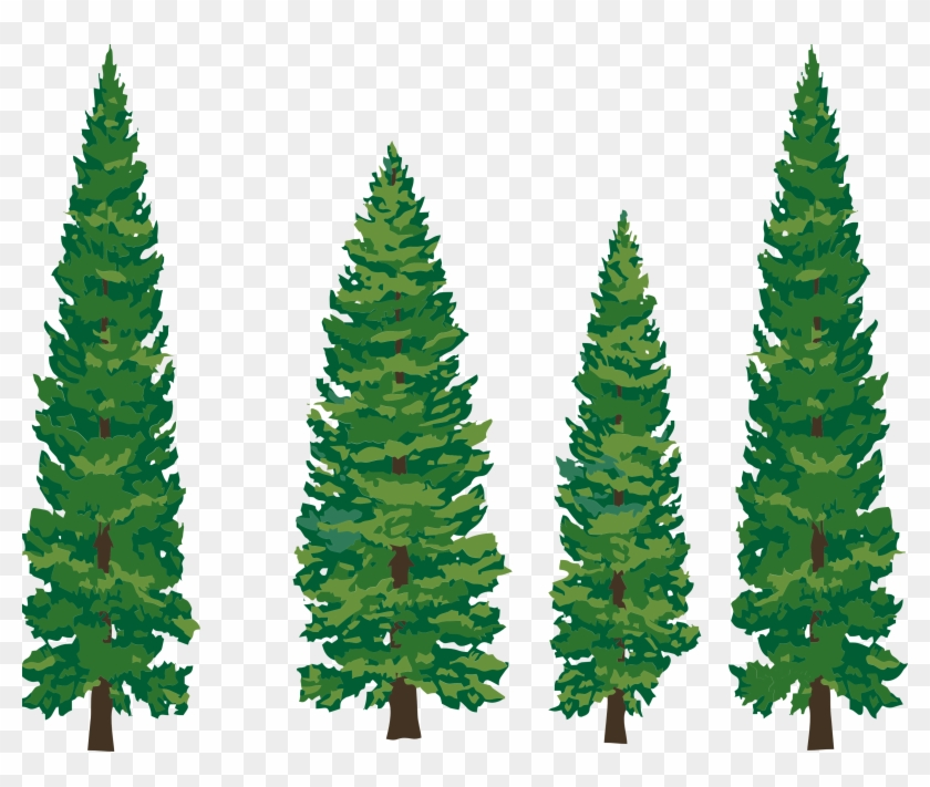 Clip - Art - Pine - Tree - Pine Tree Clipart Png #2448