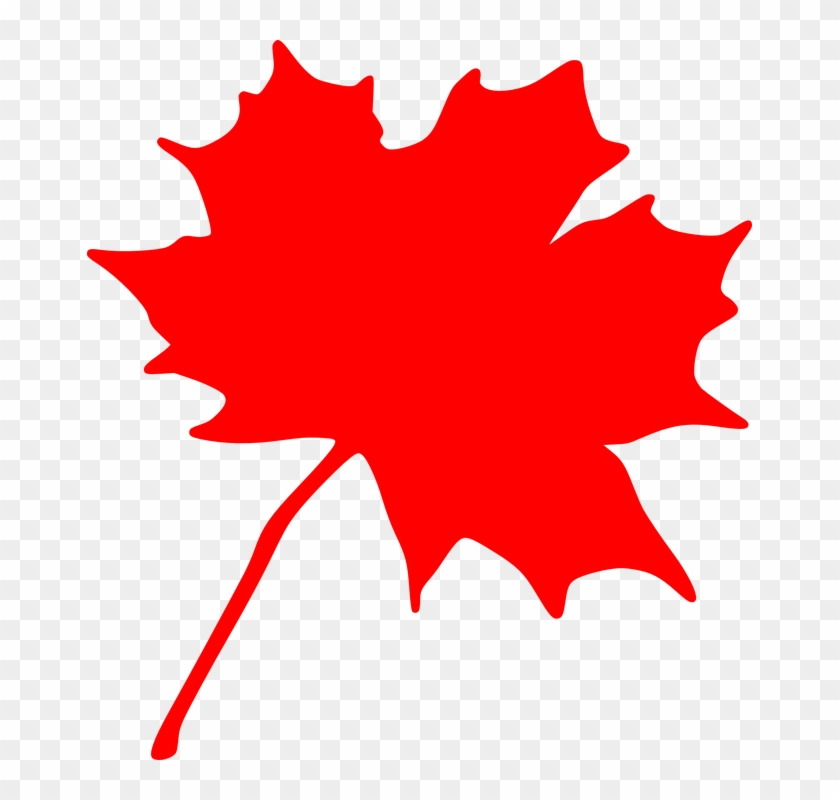 Clipart Info - Canadian Maple Leaf Clip Art #2437