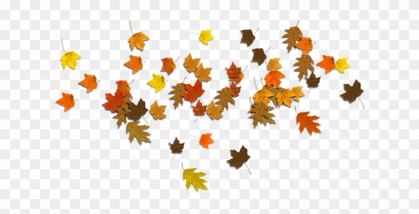 Fall Leaves Clip Art - Autumn #2608