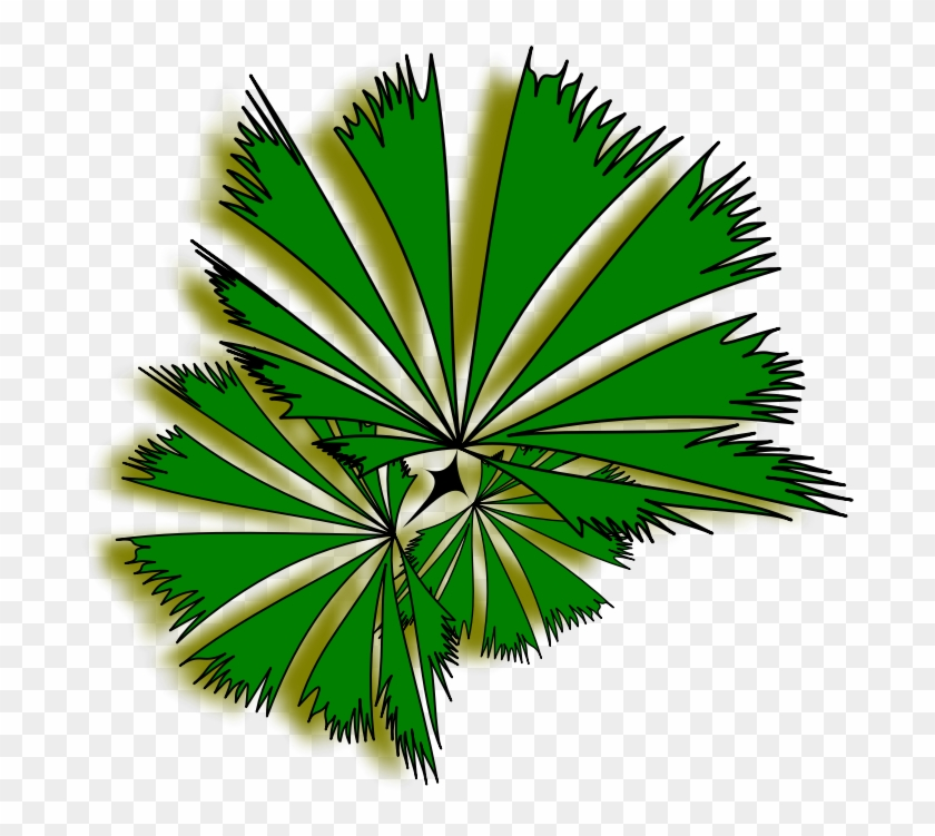 Palm Raphis 01a - Palm Tree Top View Clipart #2754
