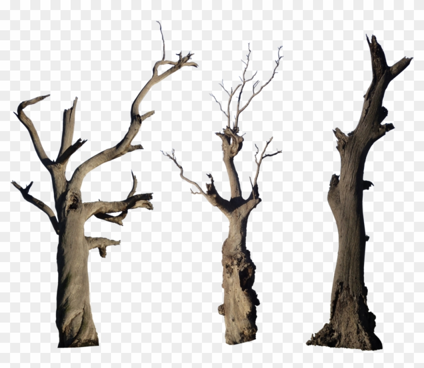 Dead Tree Pack - Bare Tree Branch Png #2909