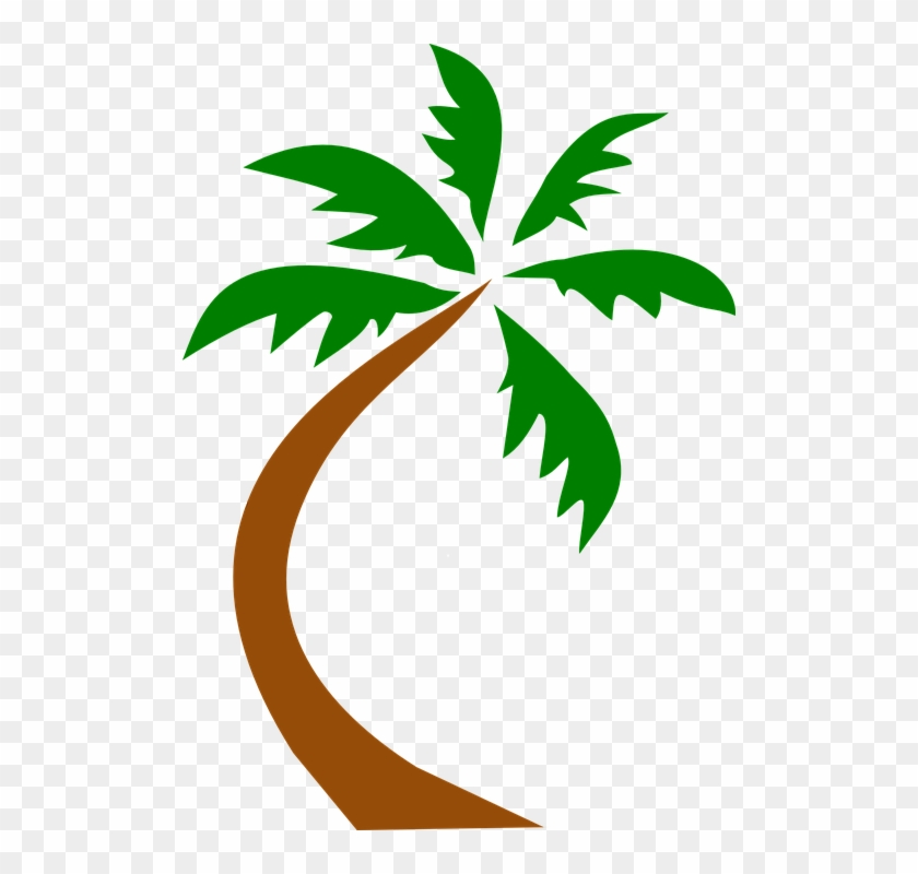 Coconut Palm Tree Curved Twisted Palm Tropical - Coconut Palm Tree Curved Twisted Palm Tropical #346