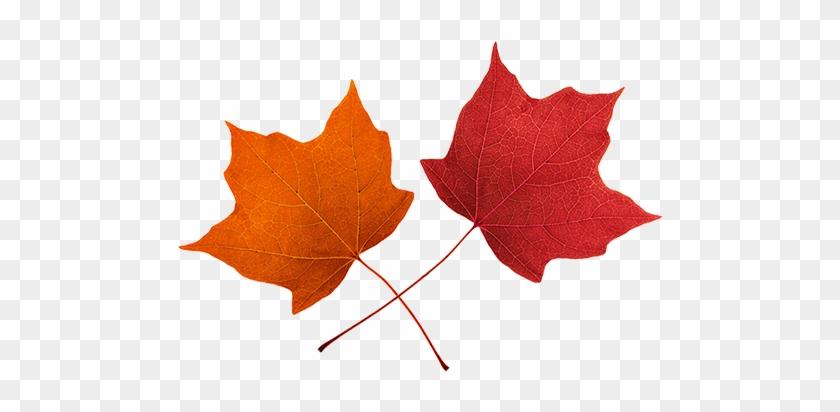 Leaves Clip Art - Red Fall Leaves Clip Art #3396