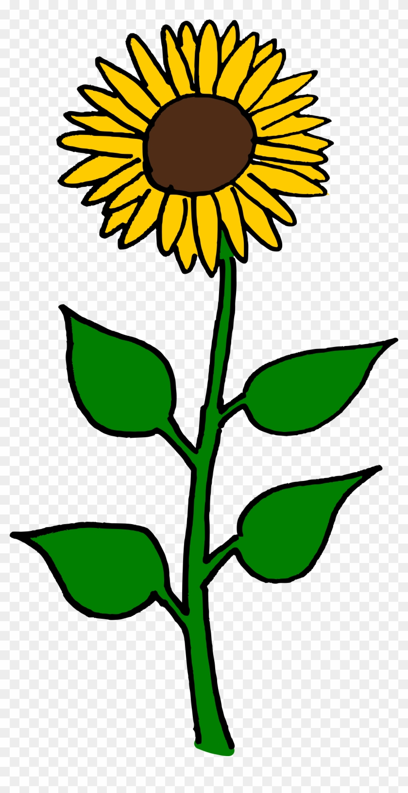 Common Sunflower Sunflower Seed Helianthus Giganteus - Giant Sunflower Clip Art #3437