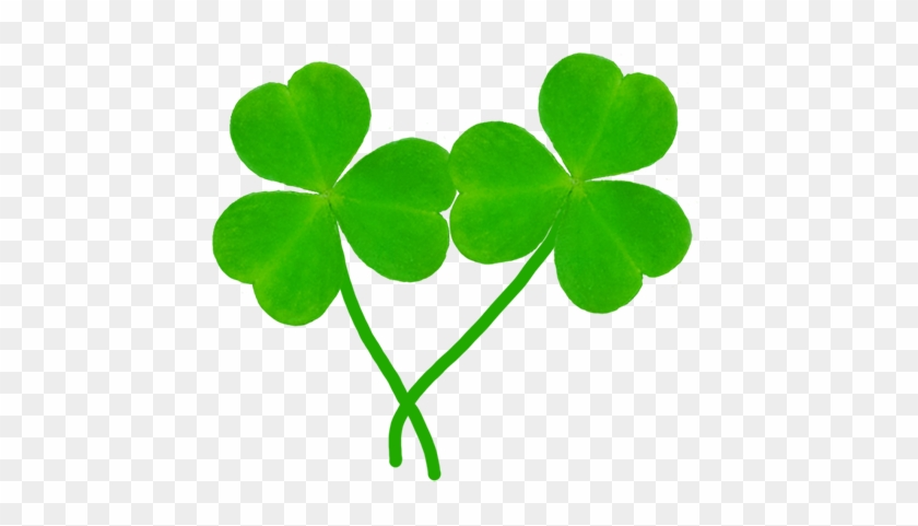 Two Leaves Of Shamrock - Two Shamrocks Clip Art #3691