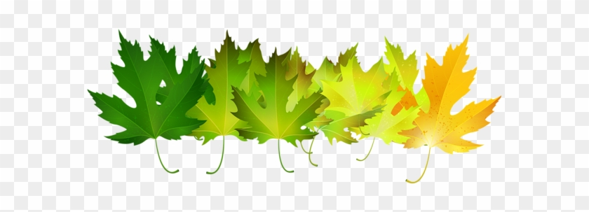 Green Autumn Leaves Transparent Clip Art Image - Maple Leaf #3687