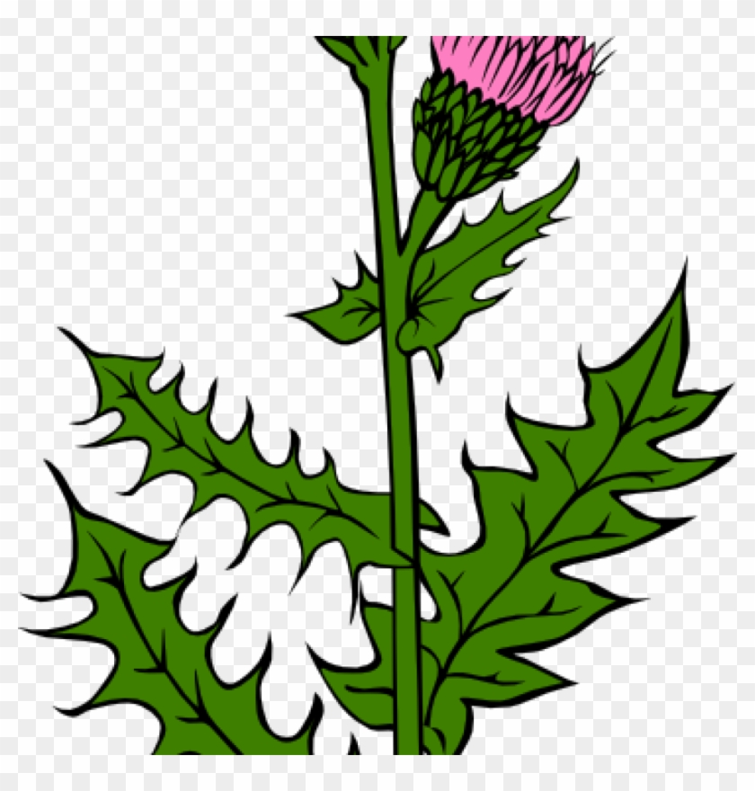 Weed Clipart Weed With Pink Buds Clip Art At Clker - Cirsium Arvense #3753
