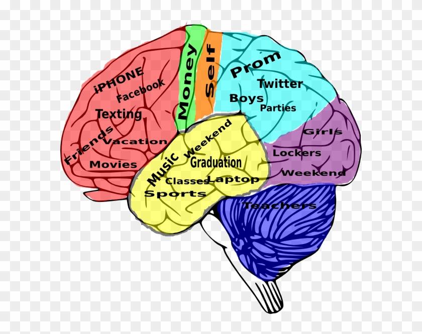School In The Brain #3935