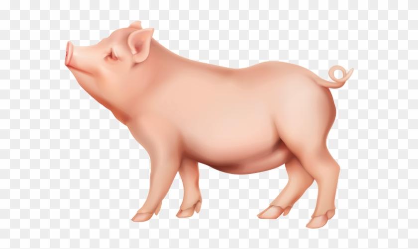 Pig Png Clip Art Image - Clipart Pig Png #4014