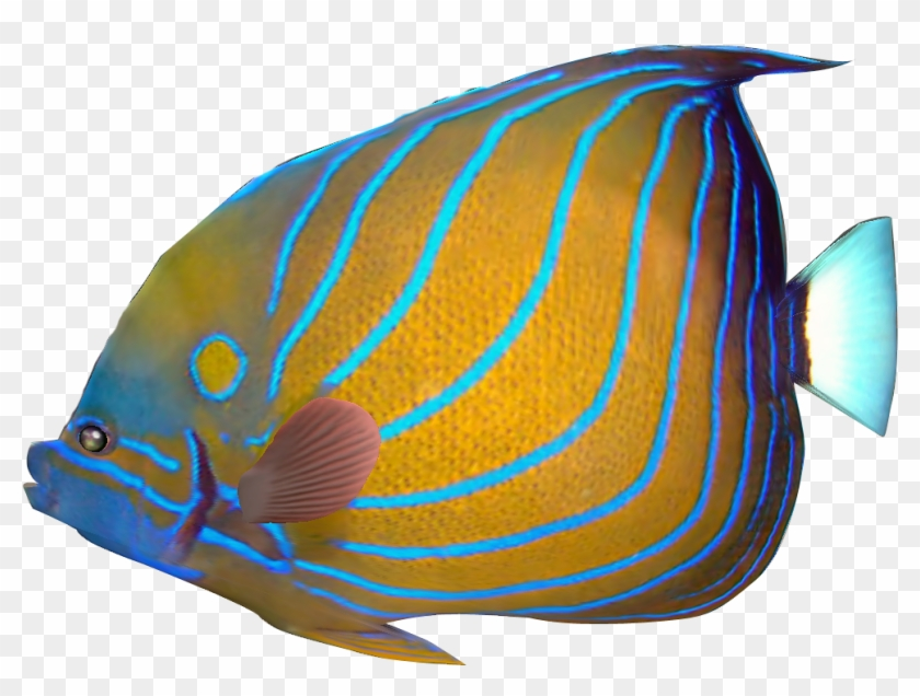 Tropical Fish Clipart Transparent Fish - Tropical Fish Png Transparent #4253