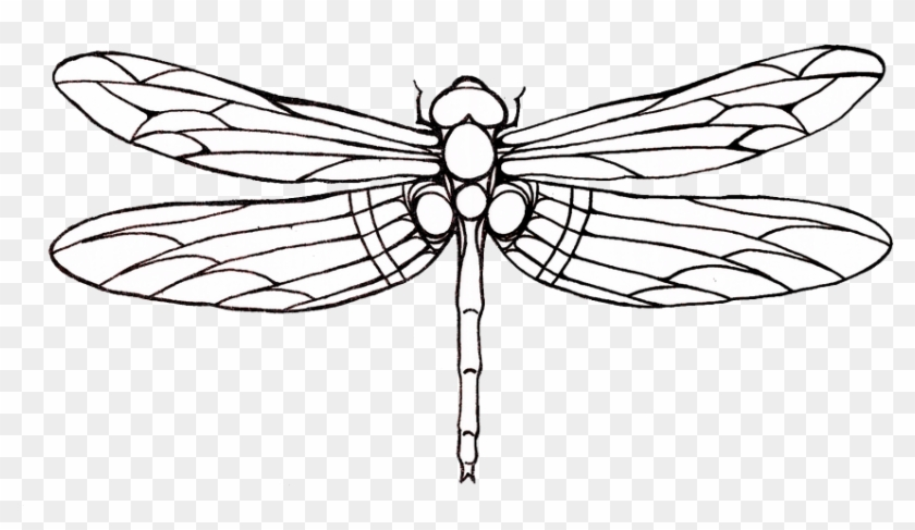 Tattoo Dragonfly Drawing Clip Art - Dragonfly Tattoo Outline #4560