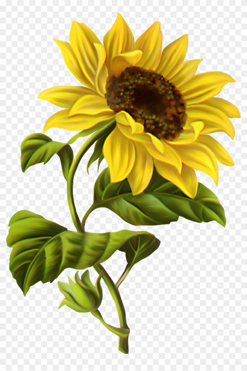 Butterfly - Sunflower Drawing #4712