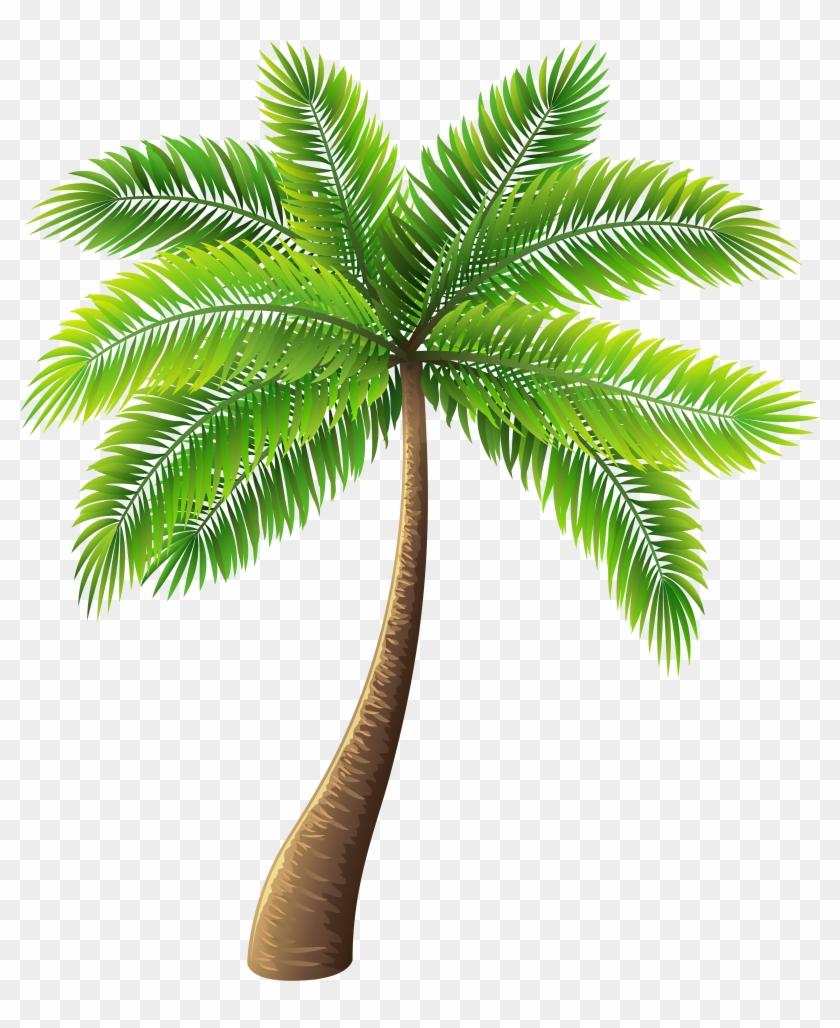 Palm Clipart #484