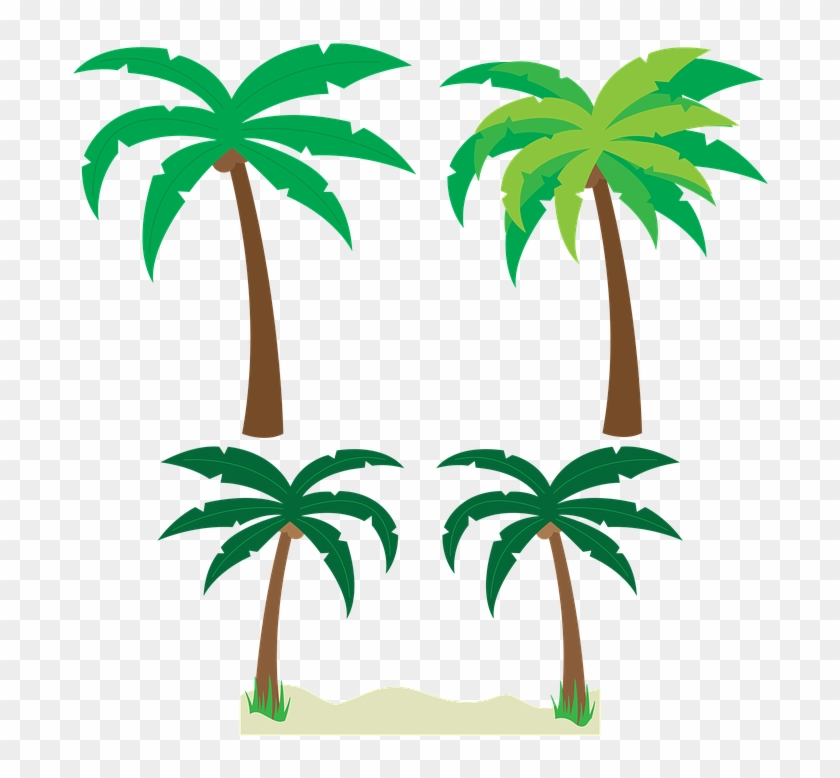 Palm Trees Trees Palm Tree Vector Tropical Beach - Palm Trees Trees Palm Tree Vector Tropical Beach #496