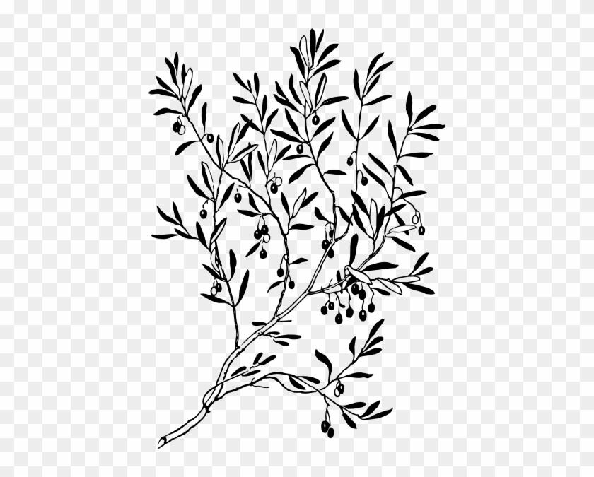 Olive Branch Clip Art - Branch Clip Art Black And White #5073