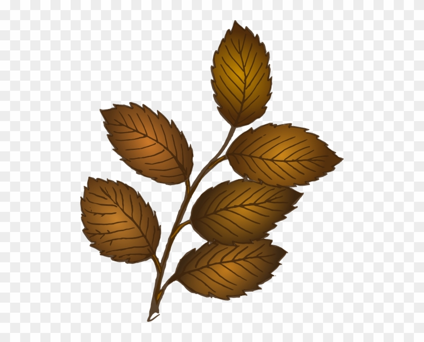 Brown Leaves On Branch #5229