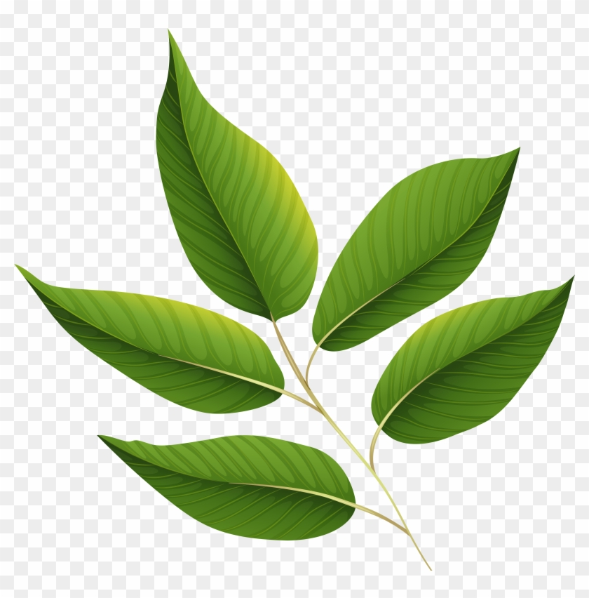 Leaves Wallpaper, Clipart Images, Green Leaves, Clip - Green Leaves Png Transparent #5244
