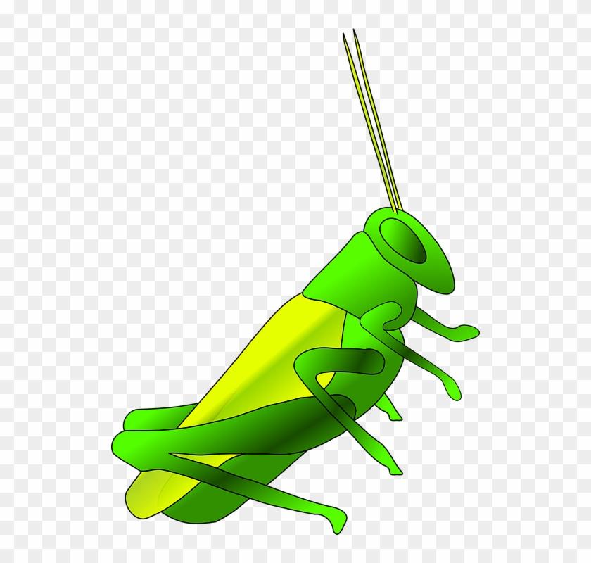 Cricket Clip Art - Crickets Clipart #5382