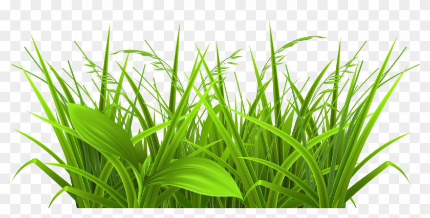 Transparent Grass Clipart - Physiological Efficiency For Crop Improvement #5458