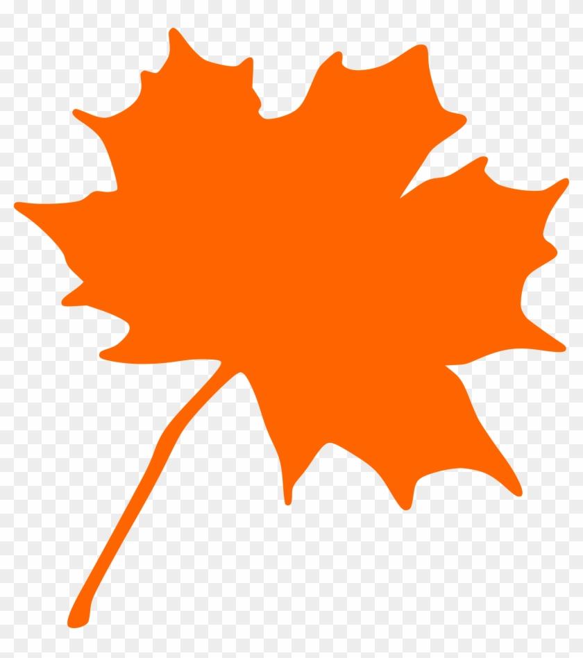 Maple Leaf Clipart Jungle - Maple Leaf Clip Art #5475