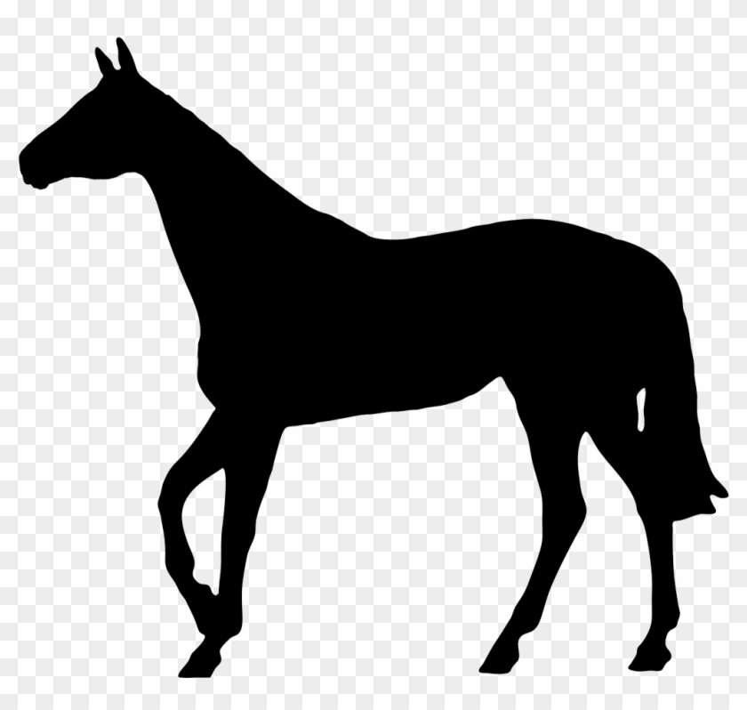 Horse Black Silhouette - Horse Silhouette No Background #5947