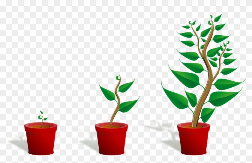 Sapling Plant Growing Seedling Growth Pott - Getting To Know Plants #6308