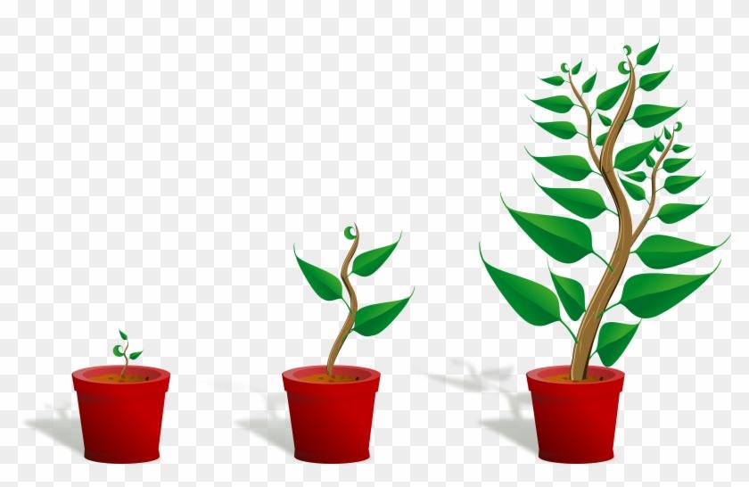 Flower - Plant - Clipart - Flower - Plant - Clipart #669