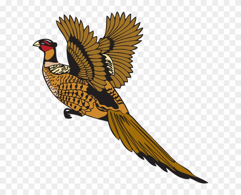 Pheasant #6609