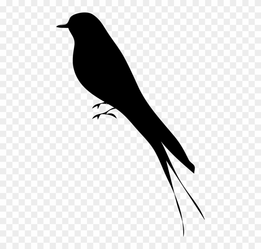 Free Vector Bird Stand Tree Vine Silhouette Clip Art - Bird Silhouette #668