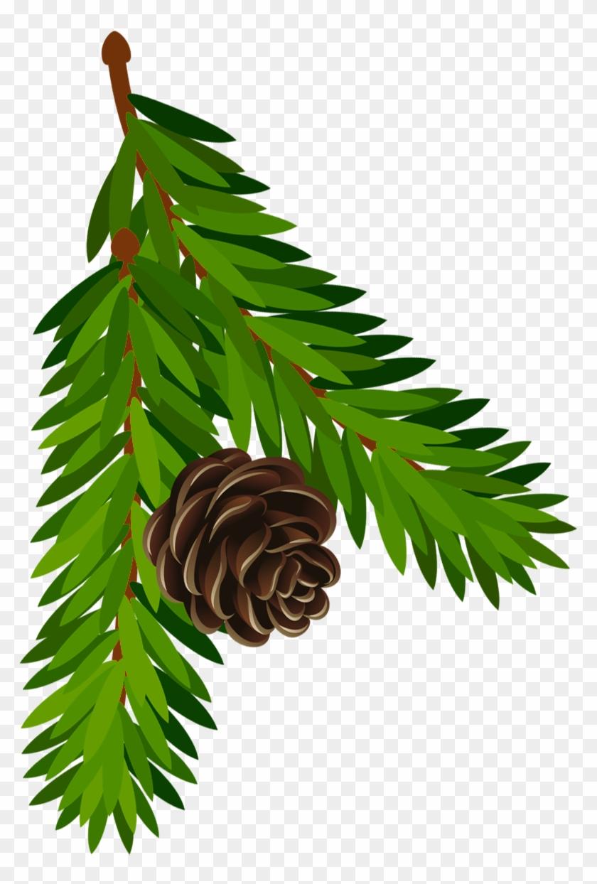 Pine Cone Branch Clip Art Pine Tree Branch Clipart - Pine Branch Clipart #702