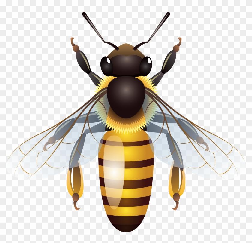Bee Png Clip Art - Bee Png Clip Art #7073