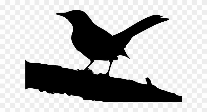 Northern Mockingbird On Tree Branch - Boo Radley Diary #706