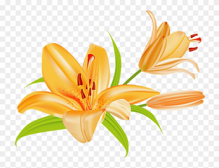 Grab This Free Summer Flower Clip Art - Lily Clip Art #7344