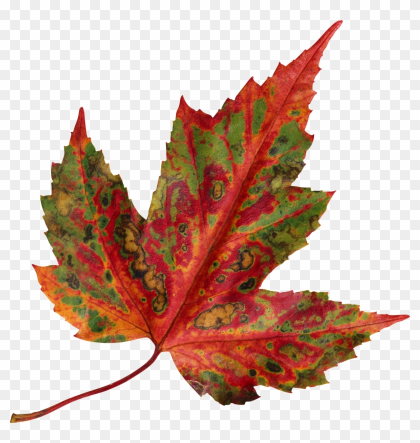 Leaf Format - Managing Project Delivery: Maintaining Control And #7404