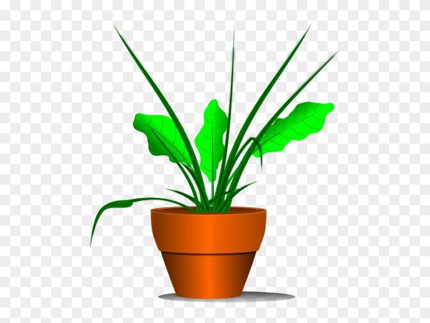 Potted Plant - Palabras Con M Inicial #765