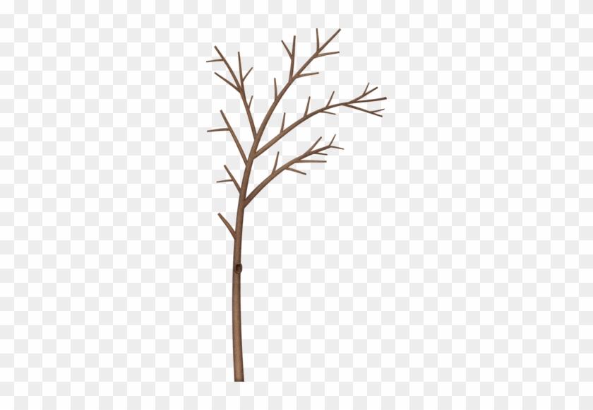 Bare Branch Tree - Bare Branch Tree #77
