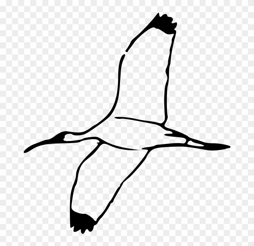 Free Wood Ibis 2 - Outline Of A Shell #7734