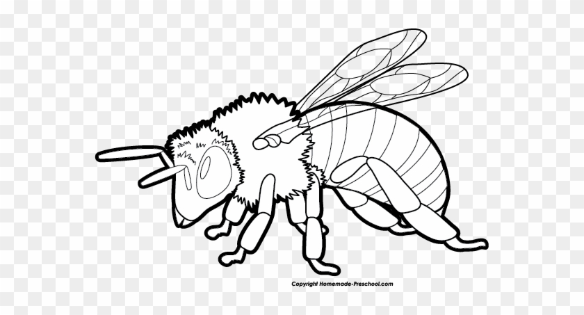 Bee Clip Art - Clip Art #7790