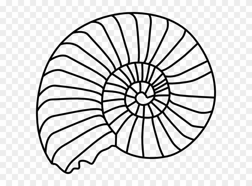 Spiral Shell Svg Clip Arts 600 X 540 Px - Fossil Black And White #7857