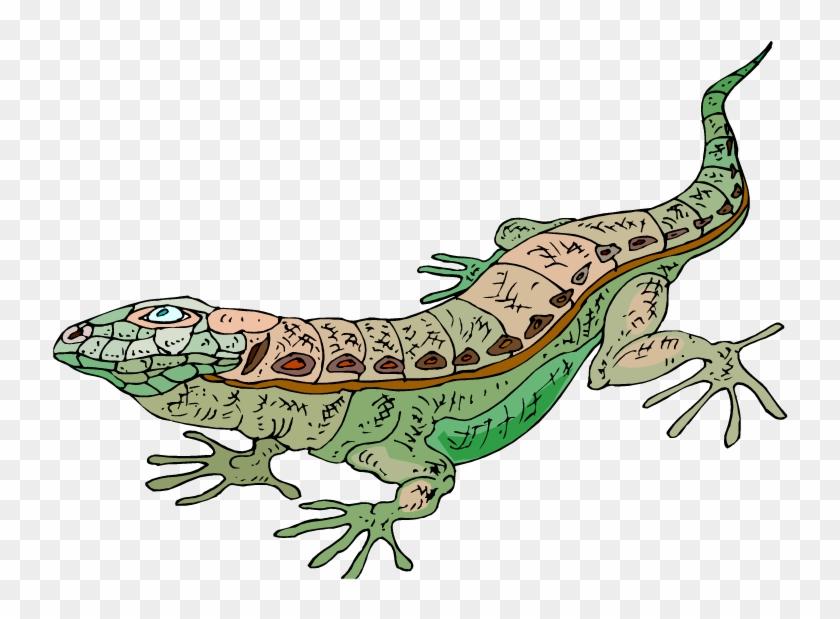 Cartoon Lizard Clipart - Clip Art #7934