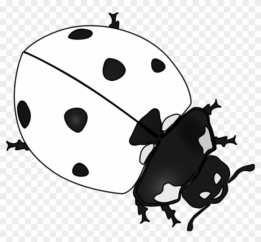 Drawn Ladybug Clip Art - Ladybug Black And White Drawing #8230