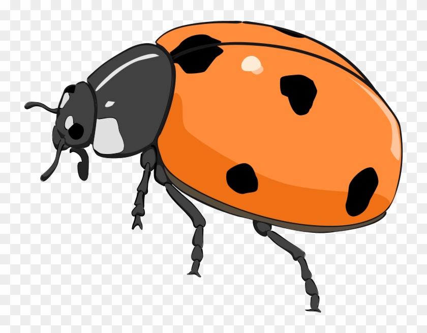 Ladybug Lady Bug Clip Art Bug Flower Leaf Branch Clipart - Orange Lady Bug Clip Art #8252
