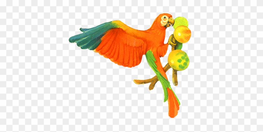 Parrot Eating Fruits Clip Art - Parrot Eating Clipart #8462