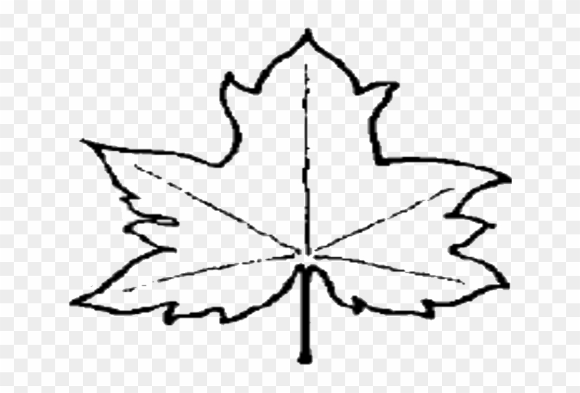 Maple Leaf Outline Clipart 3 Clipart - Outline Of A Leaf #872