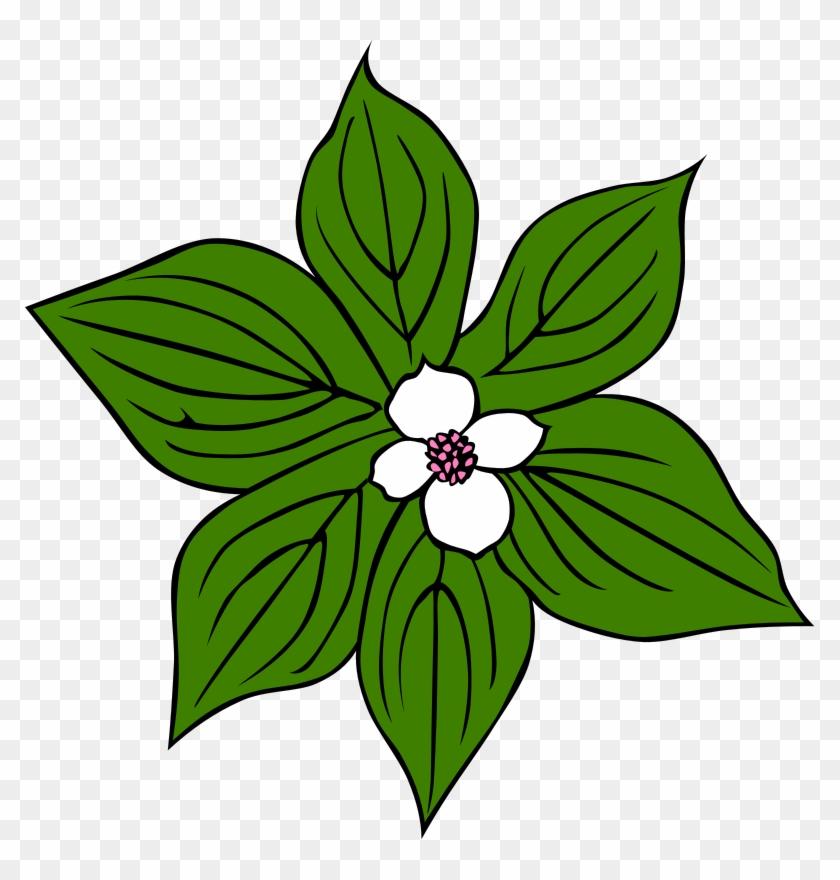 Jungle Tropical Rainforest Plant Clip Art - Jungle Tropical Rainforest Plant Clip Art #9652