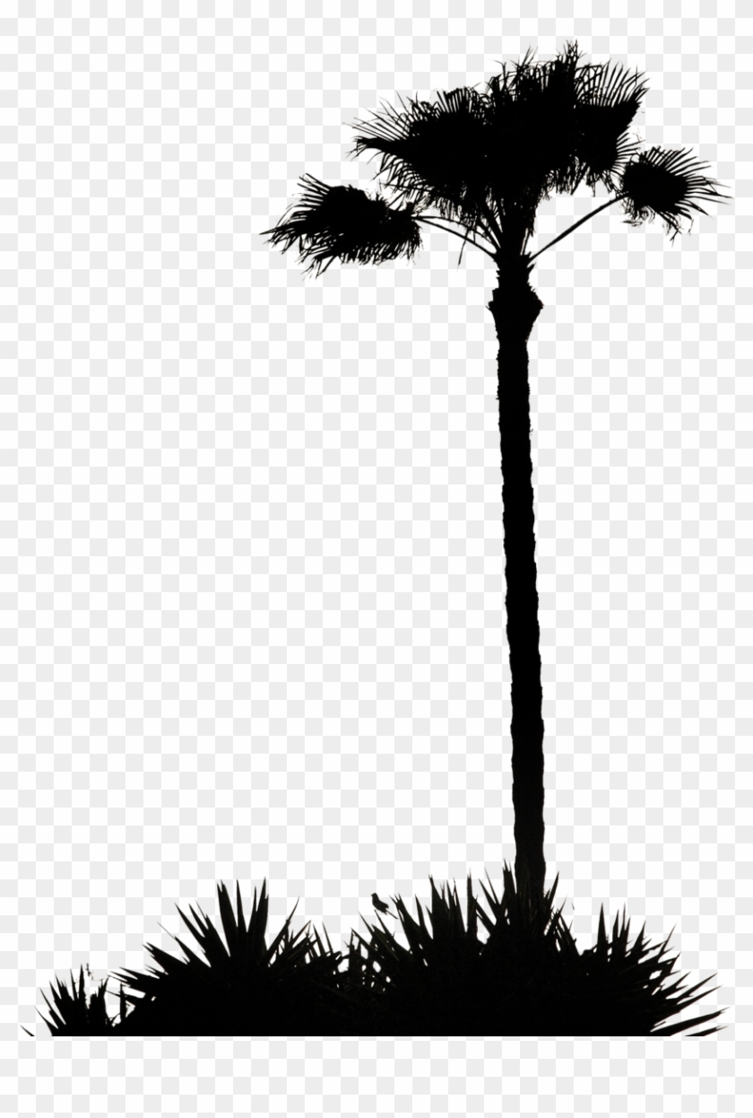 Clip Art Inspiration Palm Tree Silhouette Clip Art - Palm Tree Silhouette .png #9643