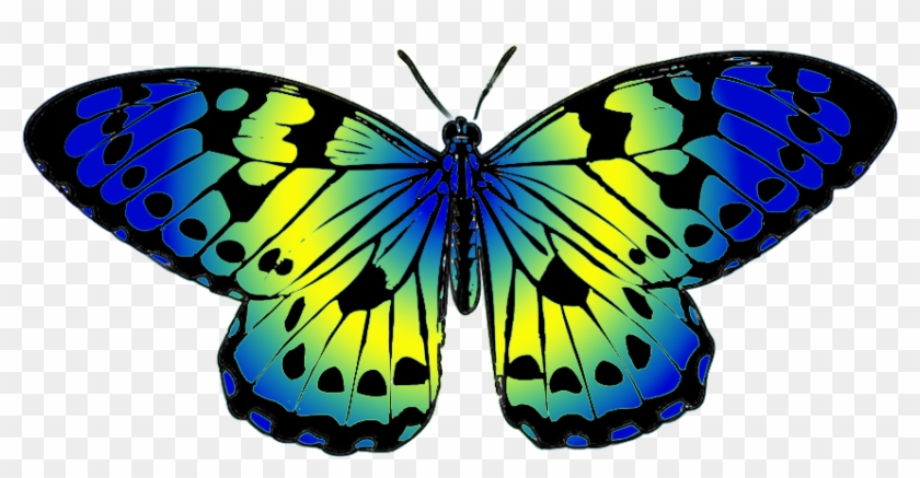 Butterfly Clip Art - Yellow And Blue Butterfly #9660